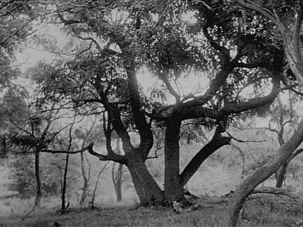 tree-film-still-1